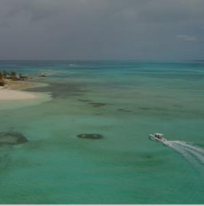 Iguana débarquant sur une île