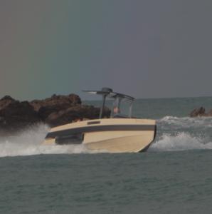 Iguana en mer à pleine vitesse